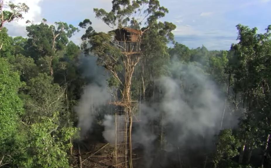 Human Planet treehouse scene screenshot (BBC, EH)