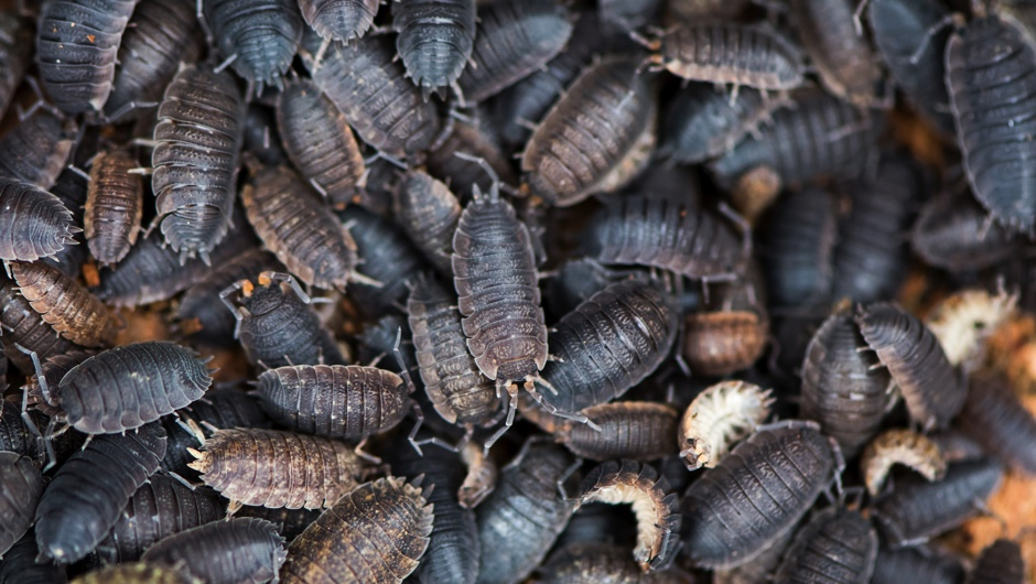 Could we survive without insects?