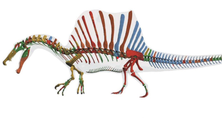 Behold The Spinosaurus The Worlds First Known Swimming Dinosaur