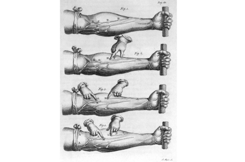 An engraving from Harvey's seminal work showing blood flowing through the veins of the lower arm. (SSPL/Getty Images)