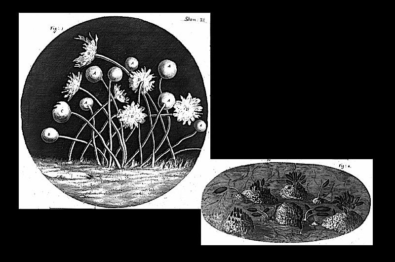 Lense views, published in 1665.