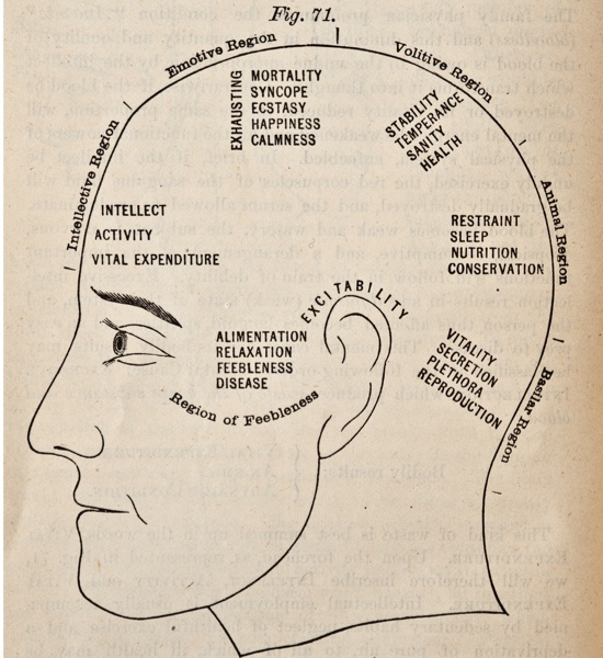 A chart of a human head from around 1881.