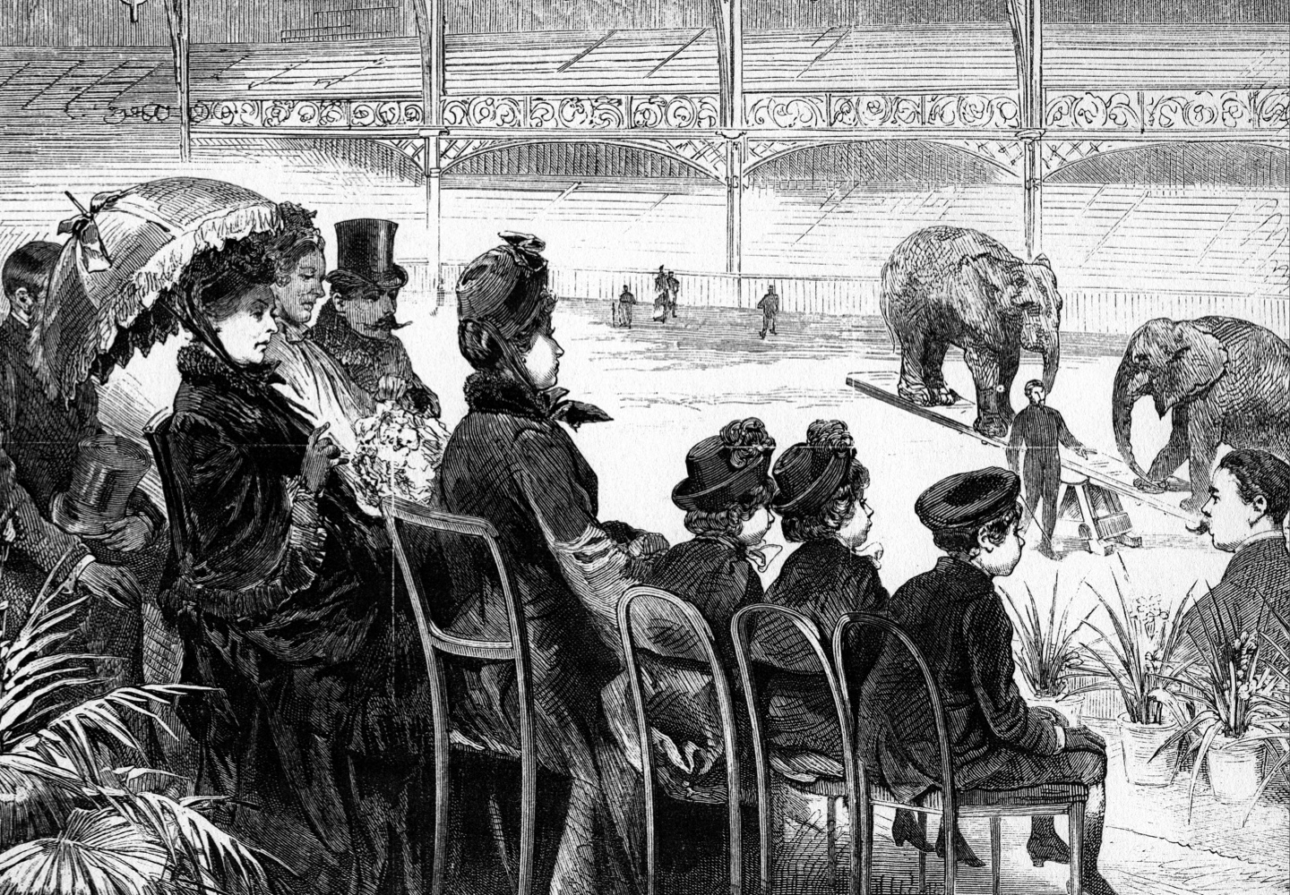 Queen Victoria and some of her grandchildren watch a display of elephants at the circus. In this period, you did not have to travel far to see wild animals, writes Sugg. (Universal History Archive via Getty Images)