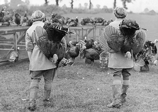 23rd December 1944:  Land girls on an Essex turkey farm round up the turkeys for the last time. These turkeys are bound for a London market and then Christmas Dinner.  (Photo by Reg Speller/Fox Photos/Getty Images)