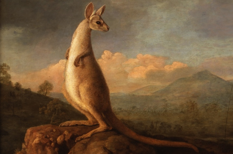 Kangaroo-©Private-Collection-Courtesy-of-Nevill-Keating-Pictures-Ltd-copy-842a42e