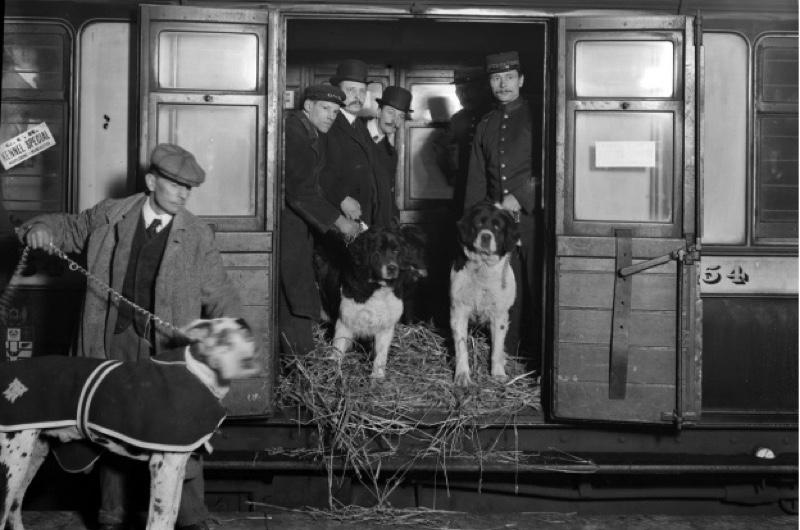 Manchester-dog-show-1909_0-2-84b0891