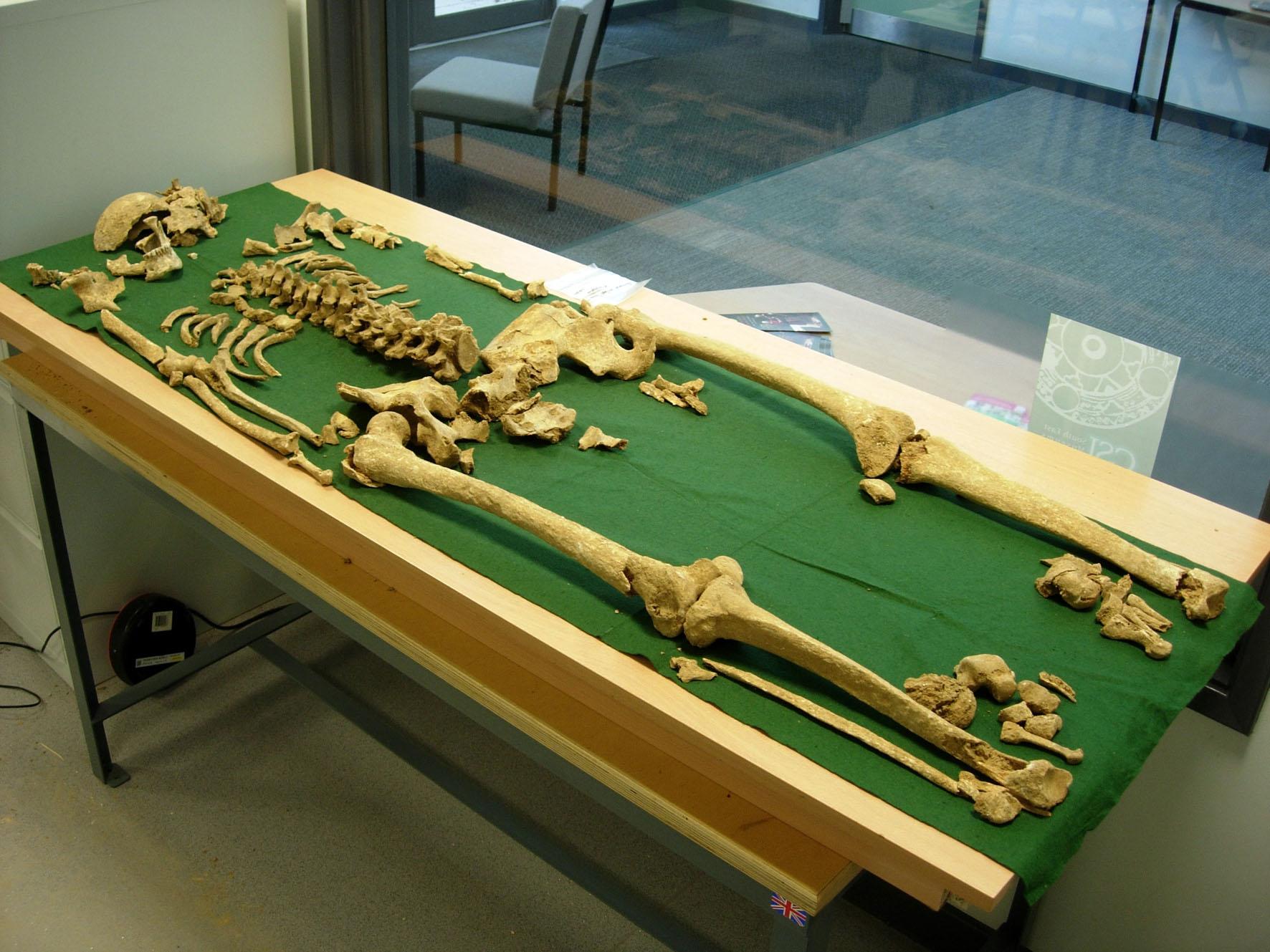 Skeleton-of-Racton-Man4-fa94686