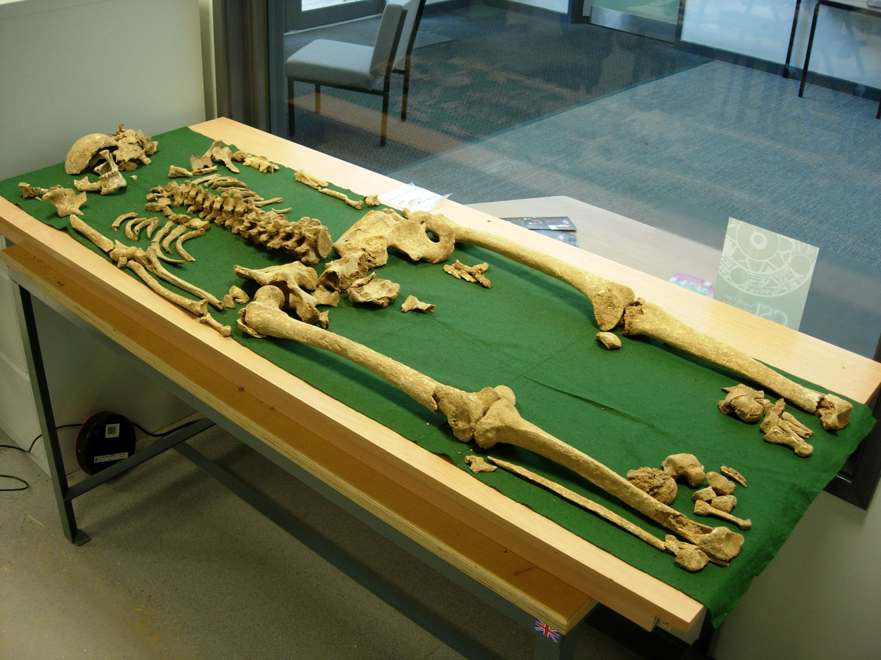 Could This Be The Skeleton Of A Bronze Age King History Extra Squirrel Diagram Greyhound