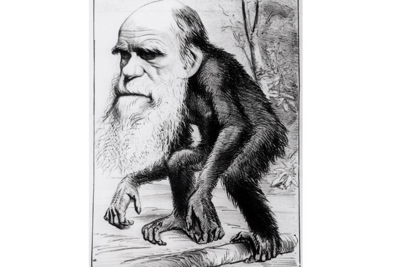 darwin-ape-4-057a0ac
