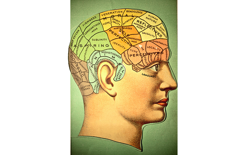 A medical illustration from 'A System of Human Anatomy Including its Medical and Surgical Relations' (by Harrison Allen, MD) shows the phrenology chart, 1883. (Photo by VintageMedStock/Getty Images)