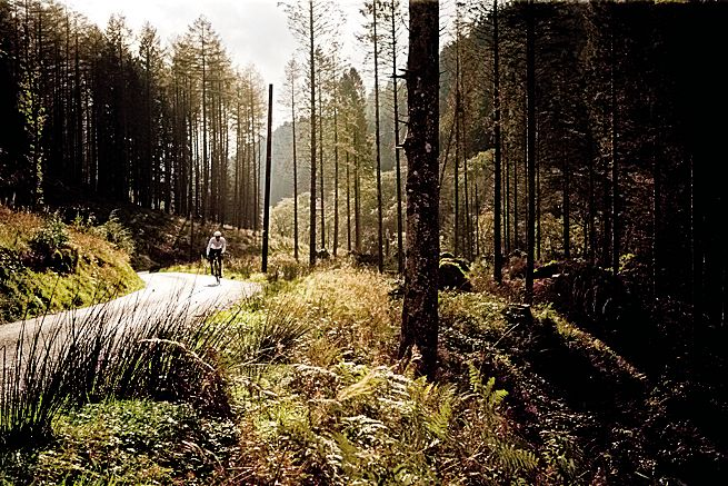 A cyclist rides through a conifer forest near Bala, North Wales