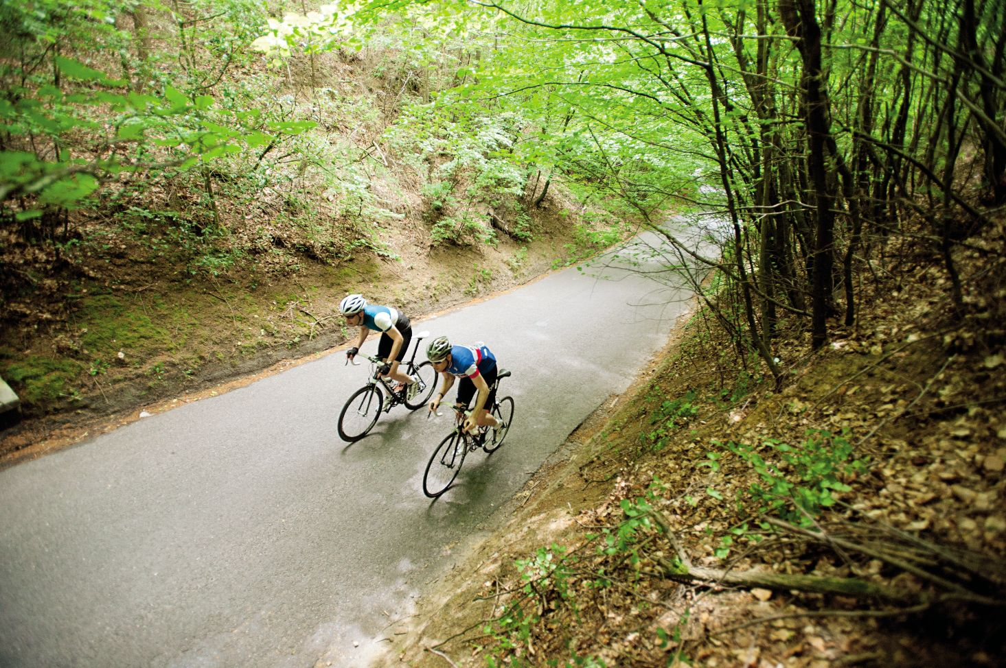 Two cyclists climbing through the trees in the Surrey Hills